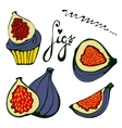 Hand drawn figs set Eco food vector image