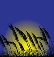 Wild grass- vector image