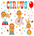 Circus lions vector image vector image
