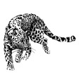 Hand sketch leopard vector image