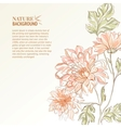 Branch of Chrysanthemum vector image