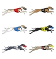 Set of running dog Whippet breed vector image