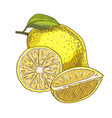 lemon with leaf half of the fruit vector image