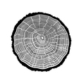 Rings of a tree with cracks vector image vector image