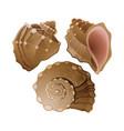 set of graphic seashells vector image
