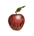 red apple with leaf full color realistic sketch vector image