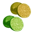 Green whole and half lime on white background vector image