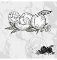 Hand drawn decorative peach fruits vector image