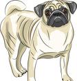 Pug vector image