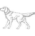 stylized dog line art artistic animal silhouette vector image