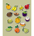 cartoon fruit vector image