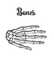 medically accurate of the hand bones vector image