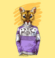 puma in knitted sweater vector image
