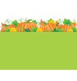 Pumpkins banner vector image