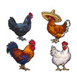 sketch hand drawn chicken set isolated vector image