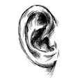 Hand sketch of the human ear vector image