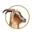 Donkey head vector image