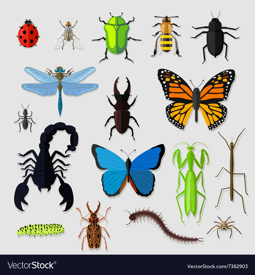 Set of various insects design flat vector