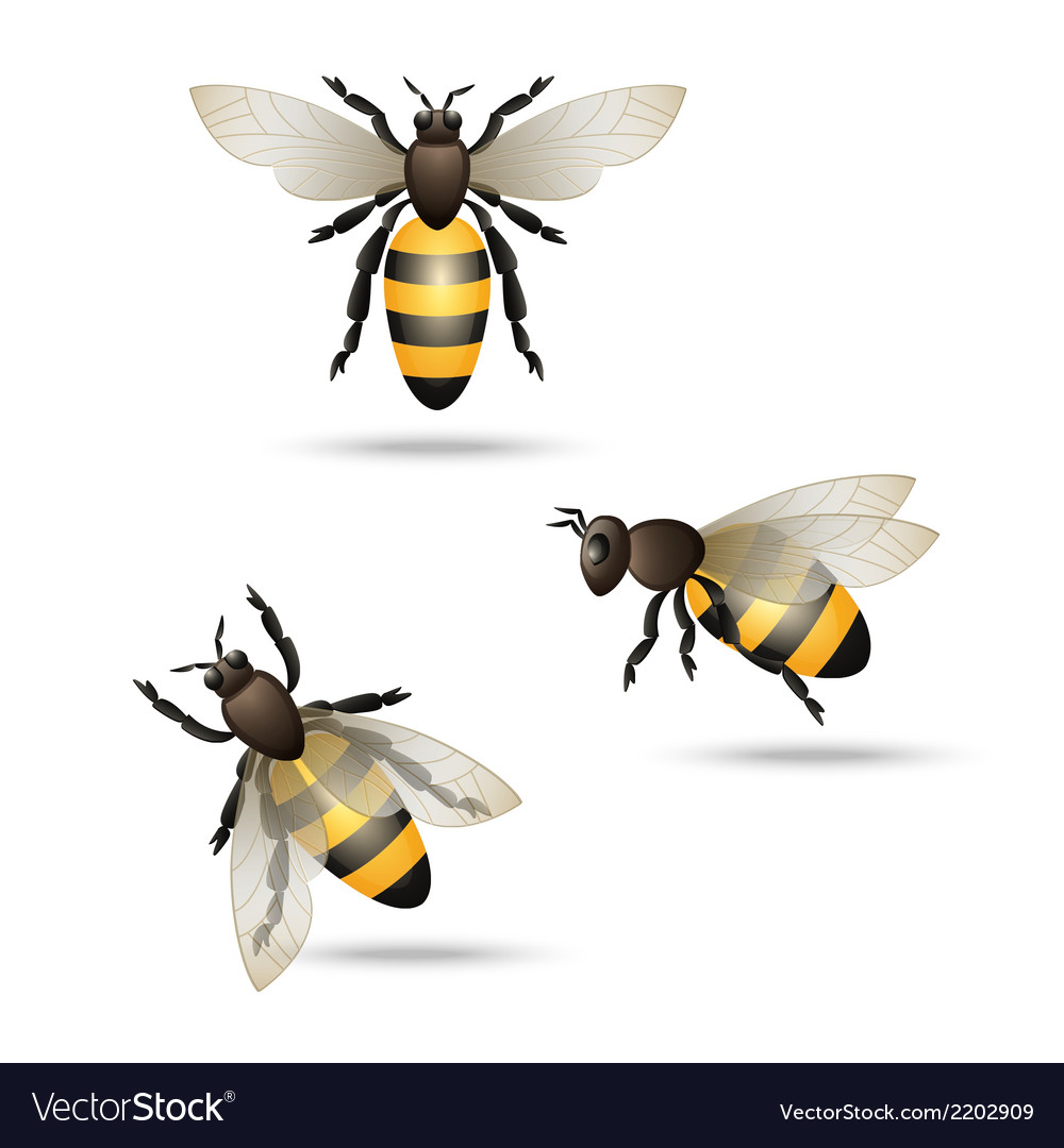 Bees icons set vector