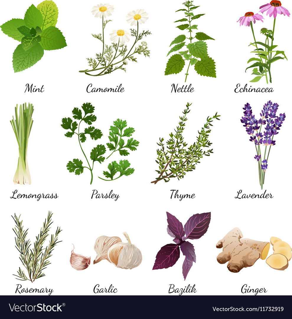 Spices and meadow flowers herbal set vector