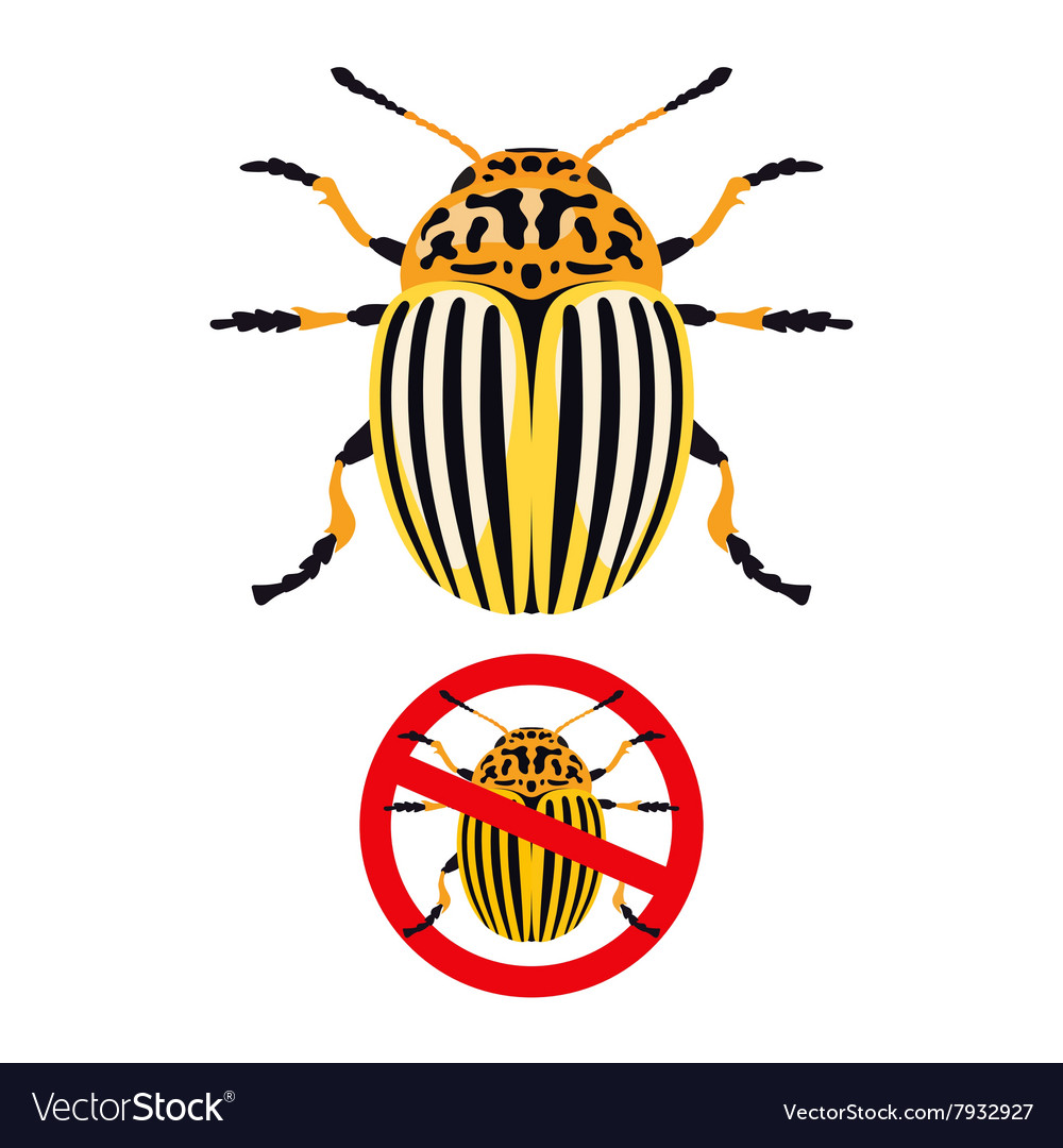 Colorado potato beetle and prohibition sign vector