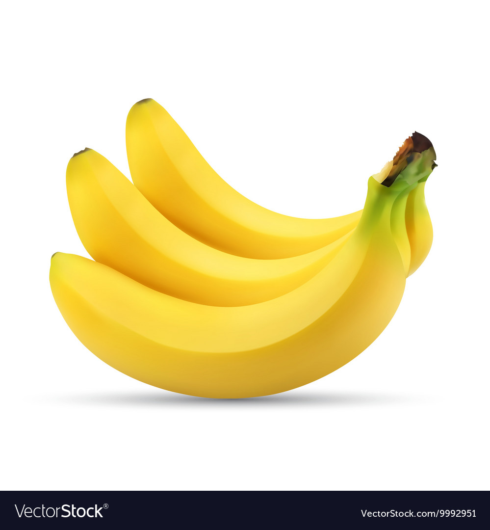 Realistic of bunch of bananas vector