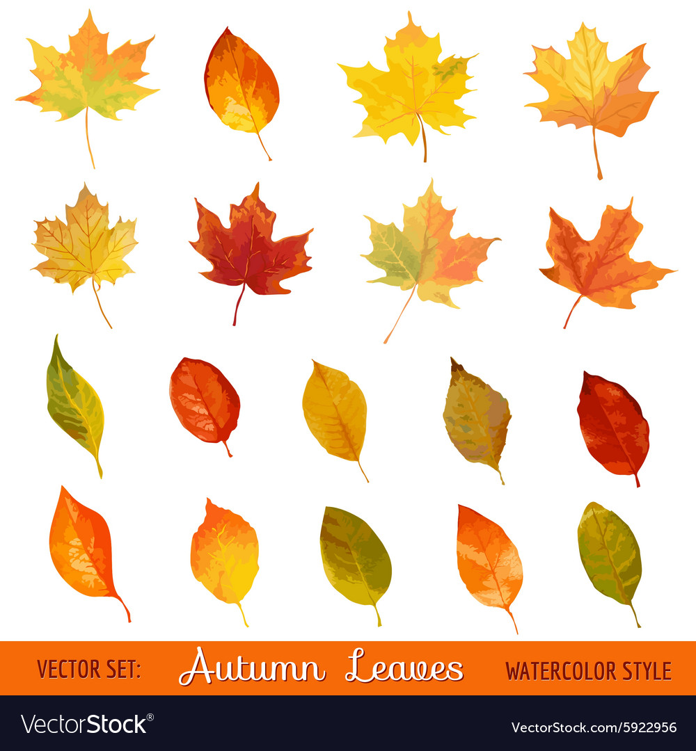 Set colorful autumn leaves  in watercolor style vector