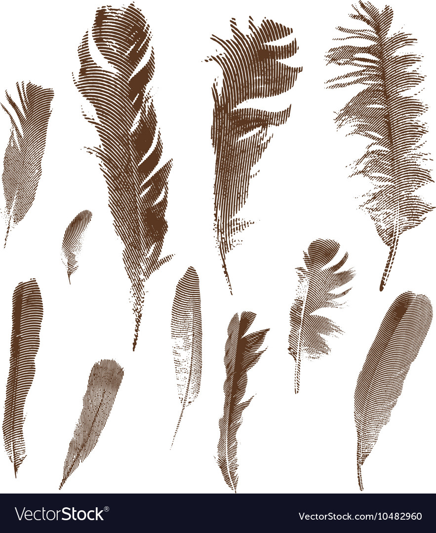 Vintage feathers set vector