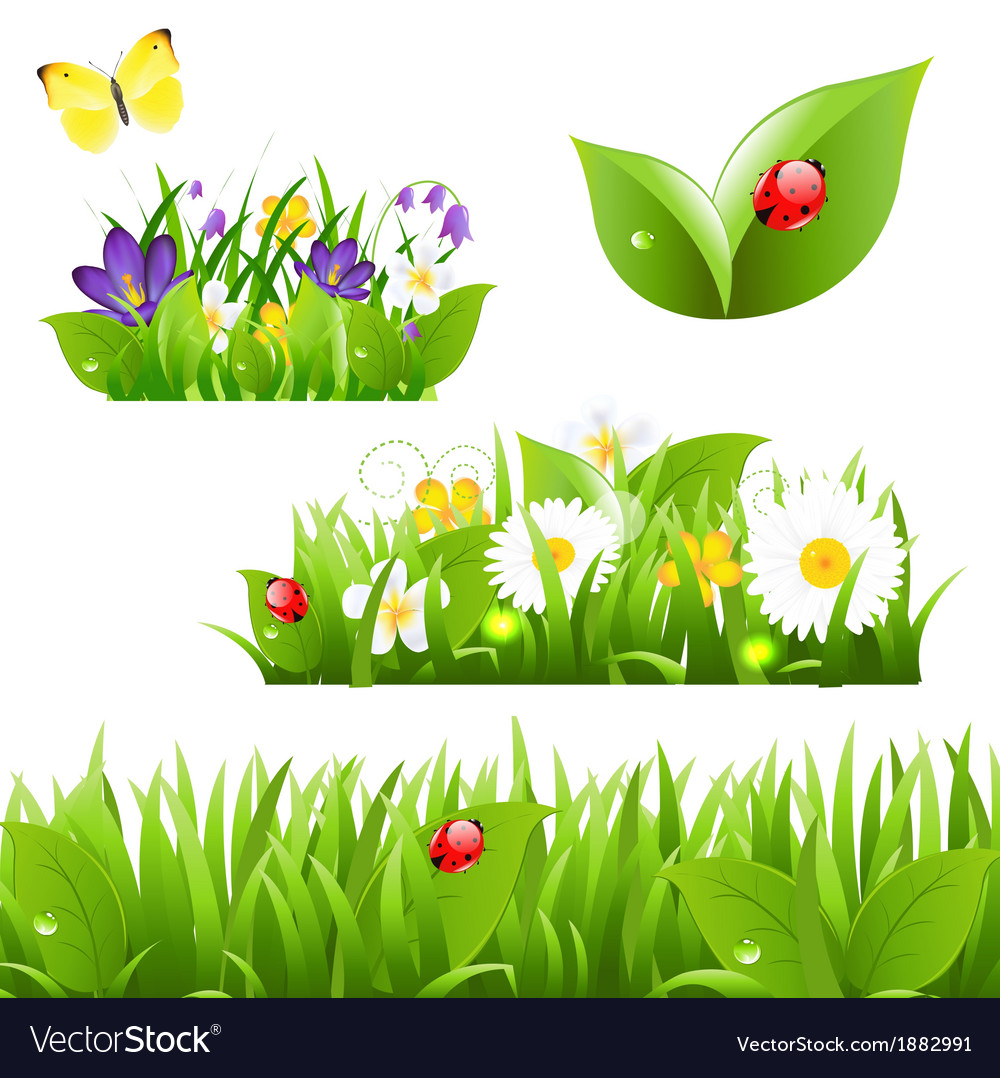 Flowers with grass butterfly and ladybug vector
