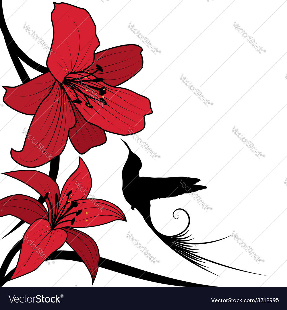 Lily and hummingbird vector