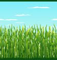 Green corn plants background vector image