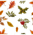 seamless pattern with different autumn leaves oak vector image