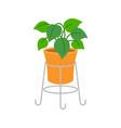 ornamental plants flat design vector image