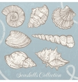 Seashells collection vector image vector image