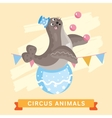 Circus Seals animal series vector image