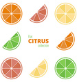 Flat icons of citrus vector image