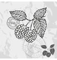 Hand drawn decorative raspberries vector image