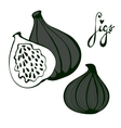 Hand drawn figs Eco food vector image