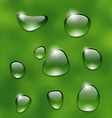 Water drops on fresh green leaf vector image