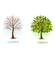 winter and summer trees vector image