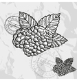 Hand drawn decorative raspberries vector image