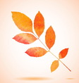 Orange watercolor painted ash tree leaf vector image