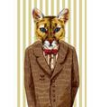 puma in a jacket vector image