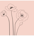 Poppies flowers vector image vector image