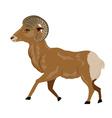 Wild Ram vector image
