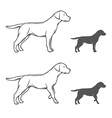 A dog in different poses vector image