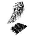 birds feathers graphic vector image