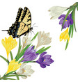 colorful crocus flowers vector image