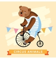 Circus Bear animal series vector image