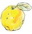 quince fruit of yellow color vector image